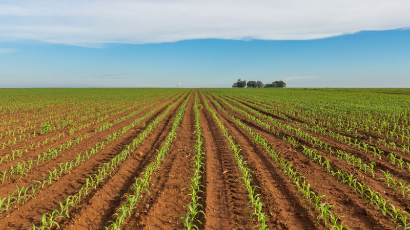 Soybeans in Argentina – political uncertainty shapes investment potential