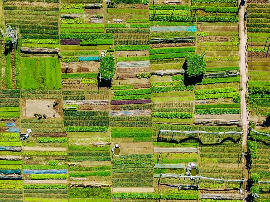 Diversification Across the Agricultural Commodities Market